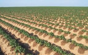 irrigation-localisée
